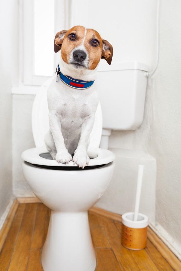 犬のうんちの量が普段より多い!考えられる原因と対処法