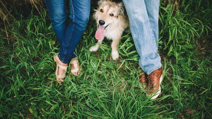 カップルで犬を飼うメリット・デメリット