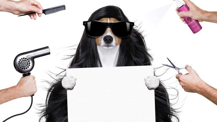 犬用泥パックの効果と使用方法について