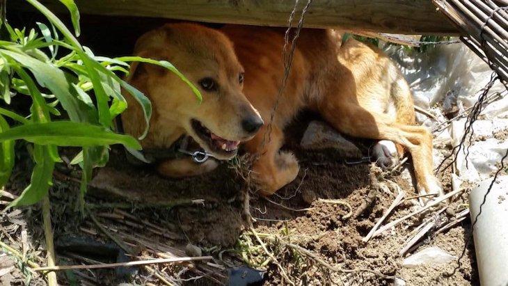 飼い主が入院、帰らぬ人に。取り残されてしまった3匹の犬たちは…