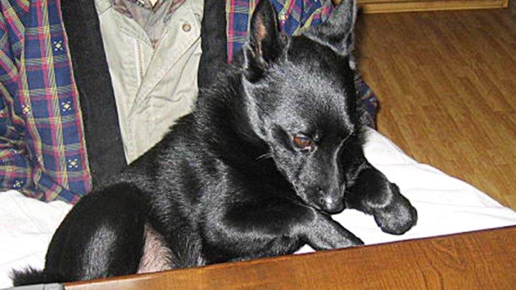 犬の外飼い派の方にも読んで欲しい「わんちゃんを飼うなら室内で」