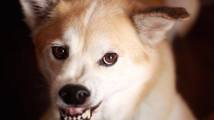 犬が本気で怒っている時の特徴とやってはいけない行為