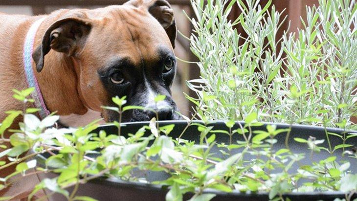 スパイス売り場で手に入るハーブで愛犬の健康サポート