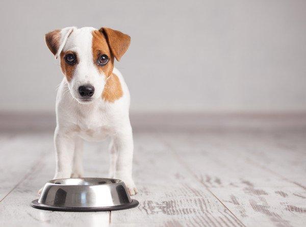 いただきません!愛犬がご飯を食べない理由とその工夫
