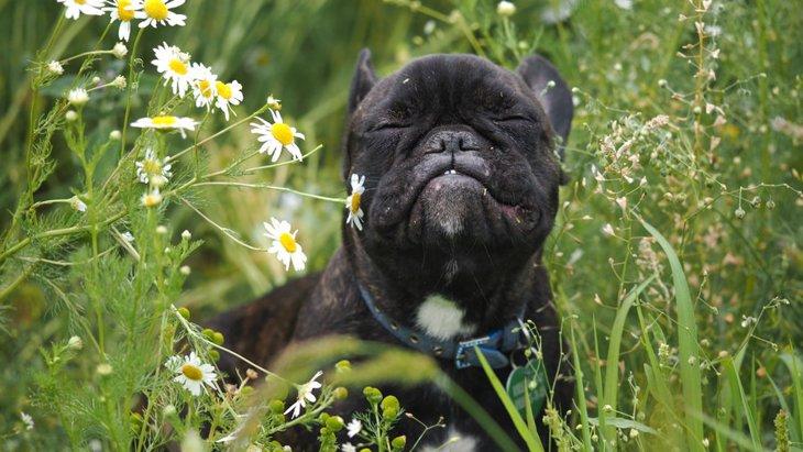 犬は「匂い」からどんな情報を集めてるの?