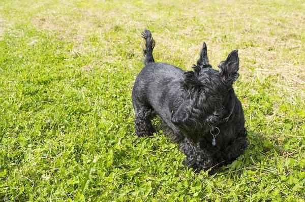犬の皮膚のしこりからわかる関連する病気について