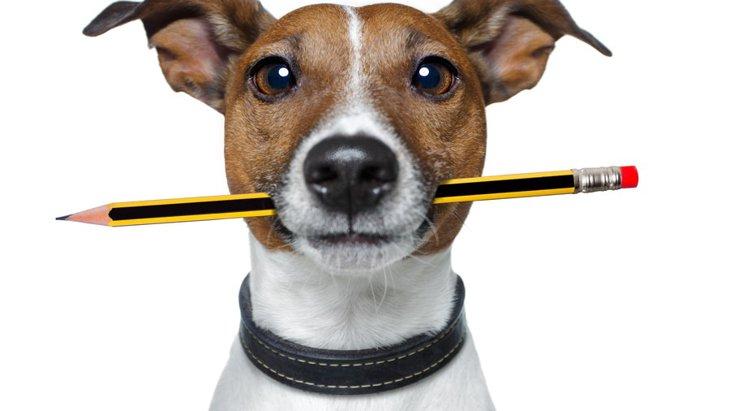 愛犬の為に!自宅からでも受験できるペットに関する検定・資格
