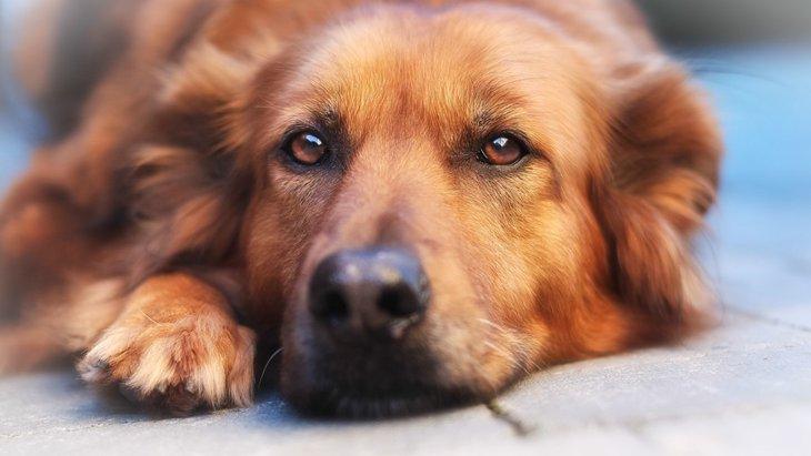 犬がつまらなそうなときに考えている4つのこと