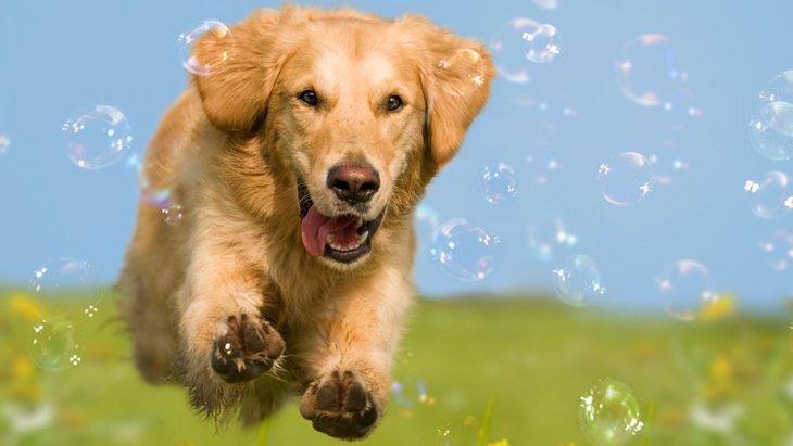 犬の散歩に行く時間帯は何時がいい?四季別のおすすめなタイミング