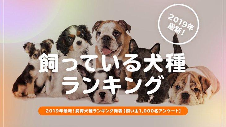 飼っている犬種ランキング発表!【飼い主1,000名アンケート】