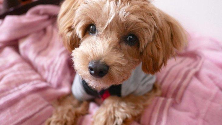 骨折の可能性も…!小型犬の飼い主がうっかりしがちな「NG行為」3つ