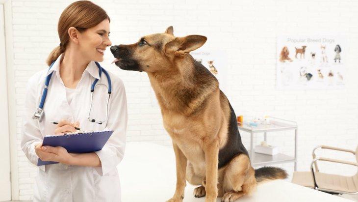 1〜2歳の犬の死因のトップは問題行動に関連しているという研究結果