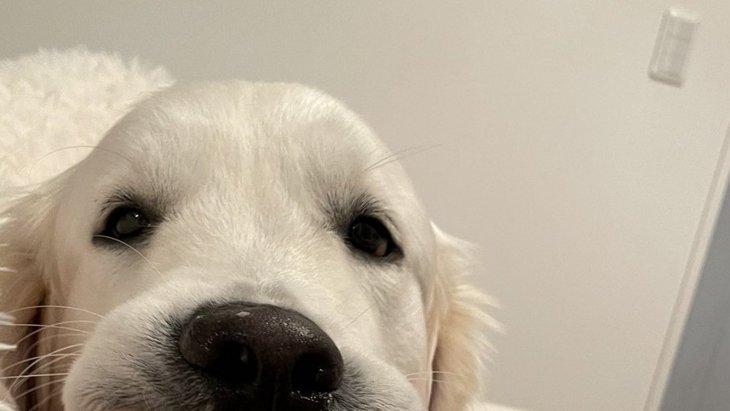 たまには愛犬に噛まれたい…!?飼い主とわんこのやり取りが話題!