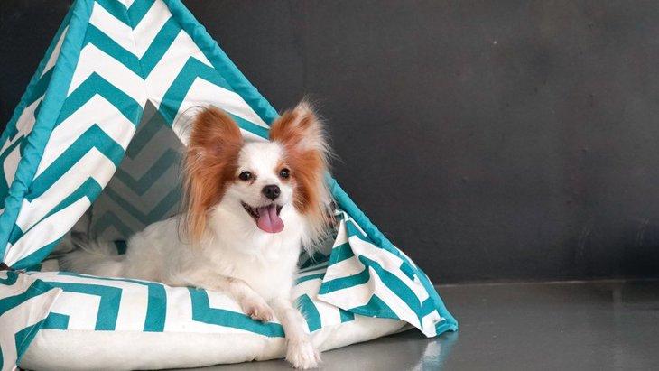 犬用のテントのおすすめランキング!オシャレな手作りティピーテントの作り方