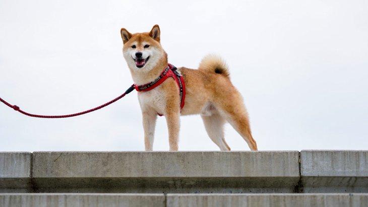 犬の『仕草でわかる本音』5選!本当は飼い主のことをどう思ってるの?