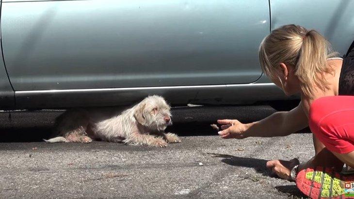 駐車場に住み付いて半年以上。保護を怖がり逃げる犬の姿が切ない