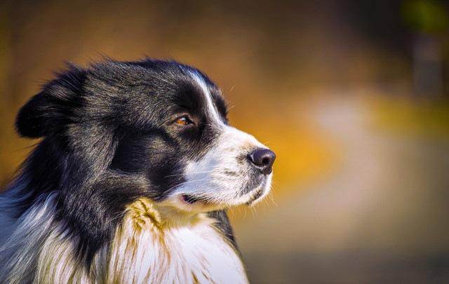 犬種のルーツがわかる、犬の遺伝子の新しい系統図が発表された!