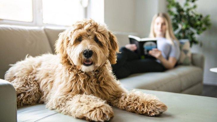 室内犬への絶対NG行為4選!こんな環境や行動は愛犬を苦しめているかも!