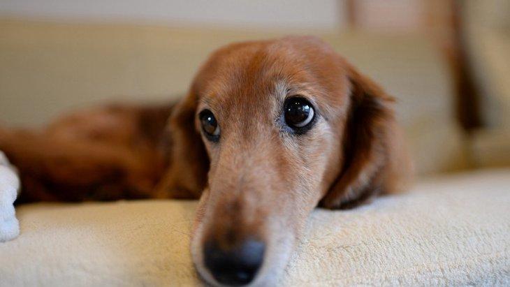犬の老後のために今すぐやるべき習慣3つ