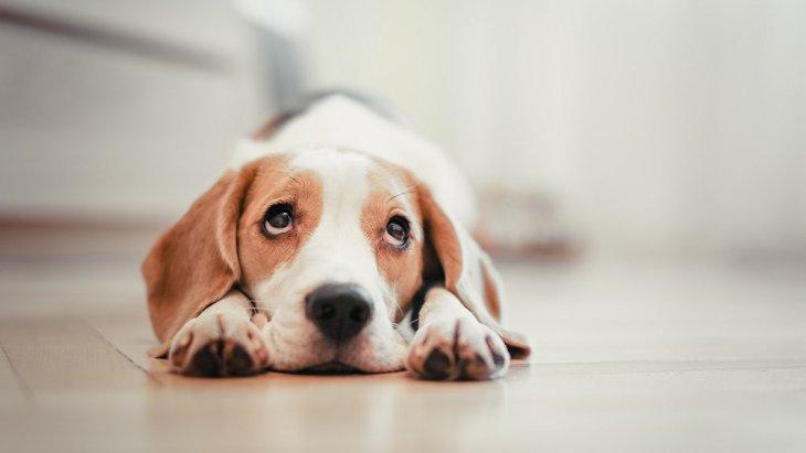 『犬は幽霊が見える』は本当?よくする4つの不気味な行動と真相を解説