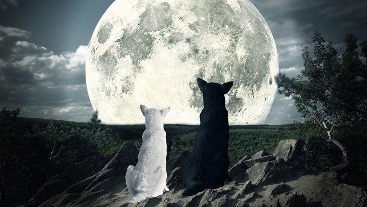 月の満ち欠けは犬の行動に影響を及ぼすのか?