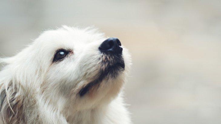 犬が『おもらし』をしてしまう原因4選!考えられる要因とその対処法