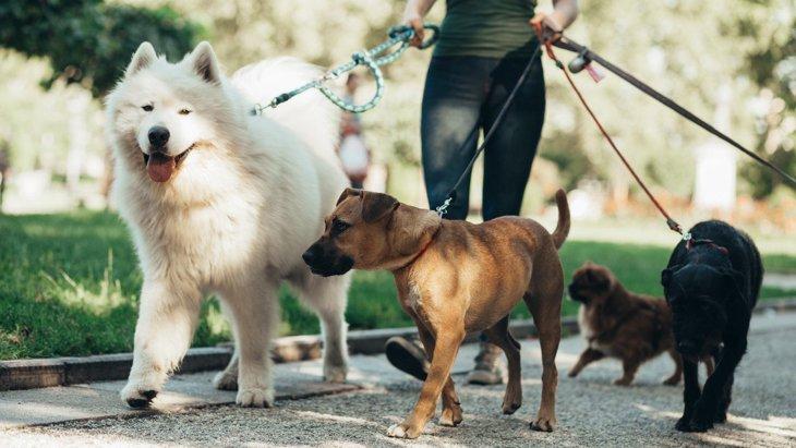 小型犬と大型犬ではこんなに違う!『犬種に合ったお散歩』講座