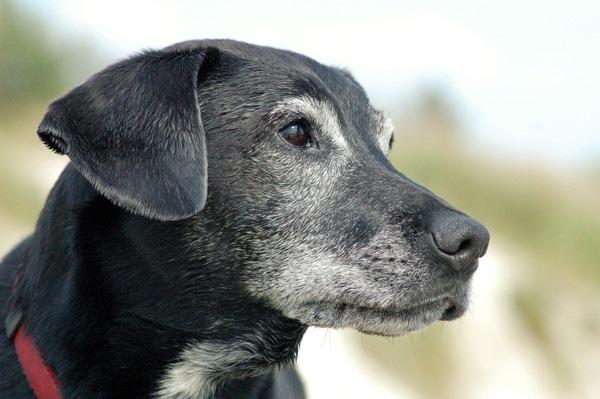 犬の17歳について 長寿の秘訣と高齢のリスク