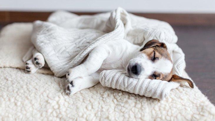 犬が熟睡している時に見せる寝相5つ