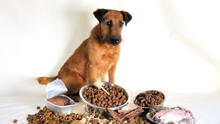 大型犬用と小型犬用のドッグフードに違いはあるの?