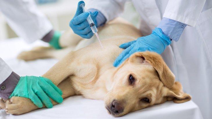 老犬にワクチン接種は必要なのか