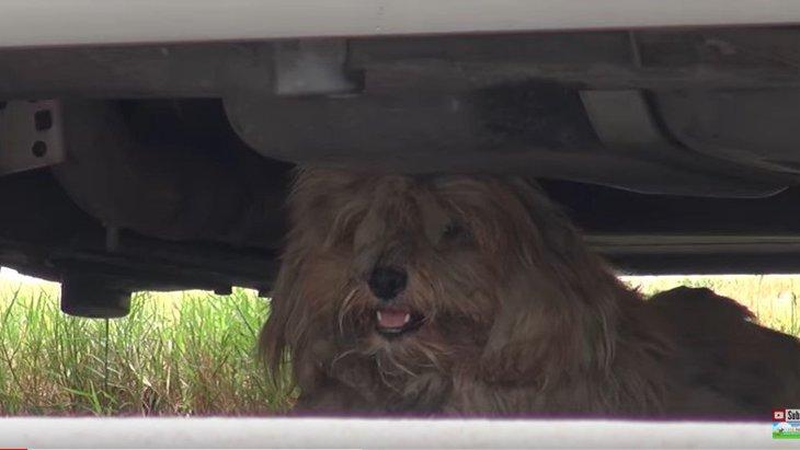 保護された野良犬がベタベタ→ツルツル→モフモフになる変化がすごい!