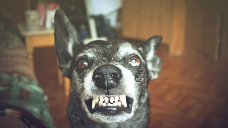 狂犬病について ~感染したときの症状・治療や予防法~