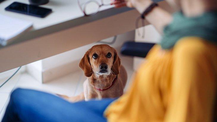 職場に犬が居ることをメリットとするには条件があるという調査結果