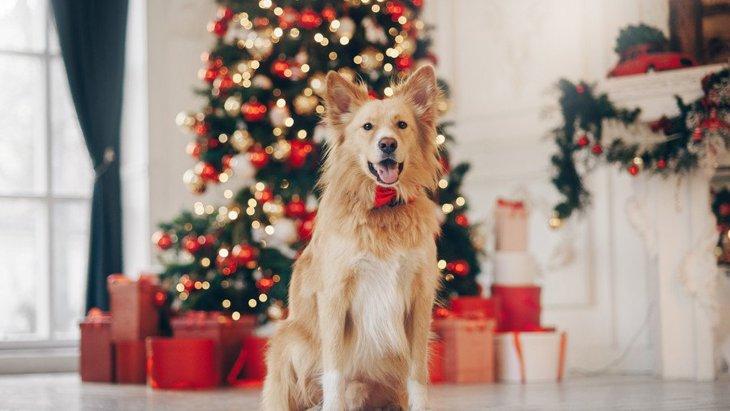 愛犬と過ごすクリスマスで作っておくべき『ルール』4選