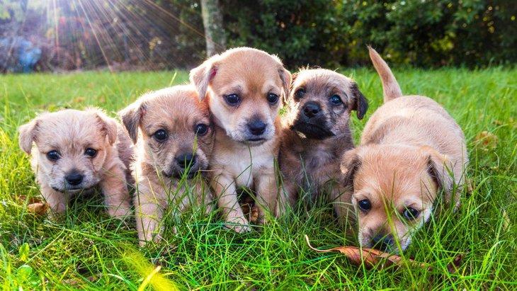 犬に安心して過ごしてもらうために意識すべき4つのこと