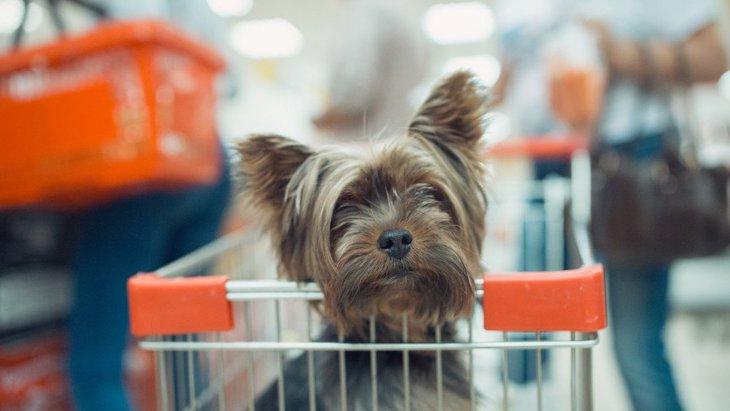 ペットショップに犬を連れていくときに絶対注意すべきポイント6選