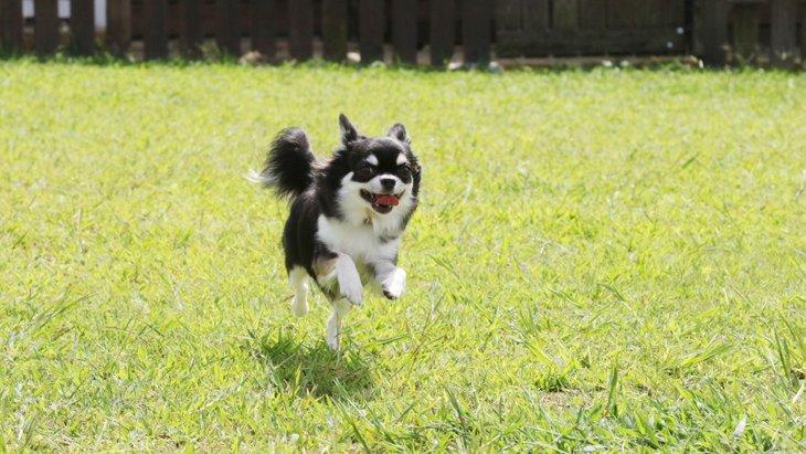 【関東】愛犬も楽しめるサービスエリア5選