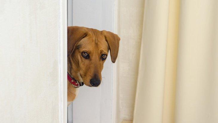飼い主が帰宅しても喜ばない犬の心理