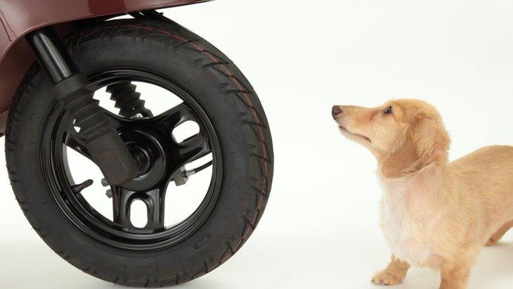 犬が交通事故に遭ったときの対応はどうすればいい?
