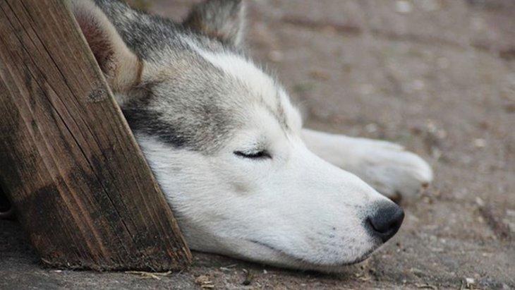 迷い犬の保護について 優しさだけでは難しい現実