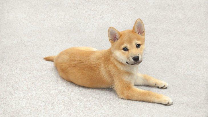 犬の心理を考えた「上手な叱り方」とは?