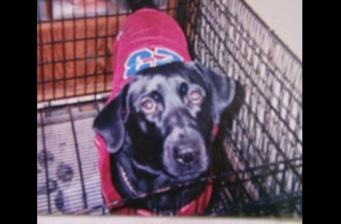 愛犬ぐぅと私の短すぎる闘病記