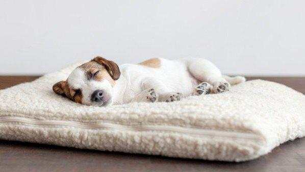犬が『一緒に寝たい』と思う飼い主の特徴3選