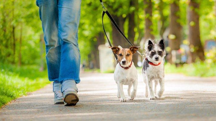 どうしたらうまく犬の散歩ができるの?犬とのお散歩の前に知っておくべきこと