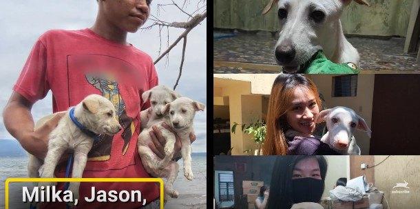 火山灰におおわれ助けを求めていた犬たちの保護。その後の様子…