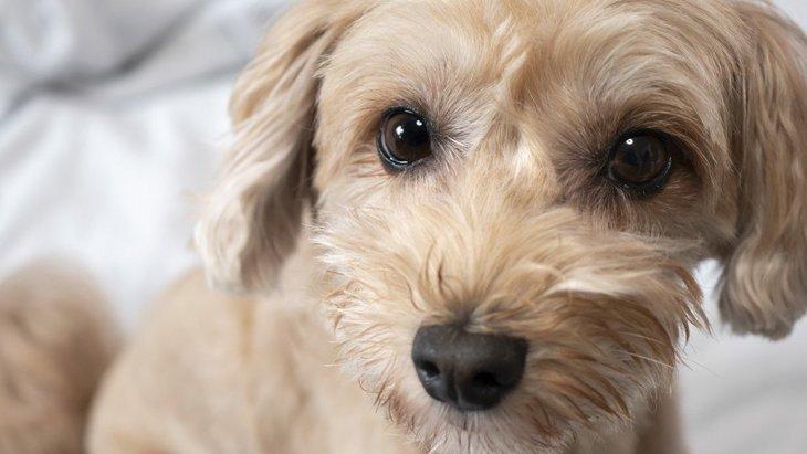 『優しい犬』がよくする仕草や行動4選!あなたの愛犬はどんな行動をしてくれる?♡