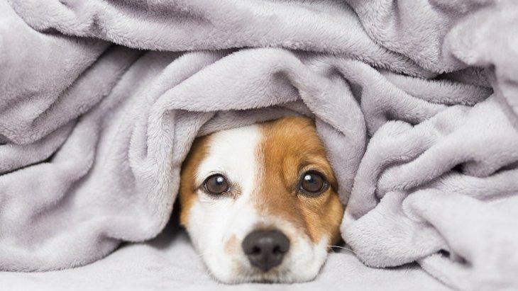 冬なのに愛犬が熱中症になる?!冬の過剰な寒さ対策はNG!