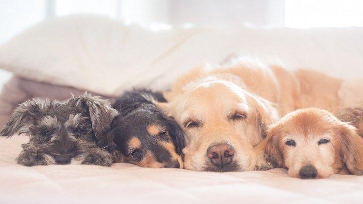 小型犬と大型犬は一緒に飼うべきではない?大きさは相性に関係あるの?