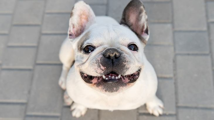 『吠えにくい』と言われる犬種5選!吠える犬になるのは飼い主のせい?